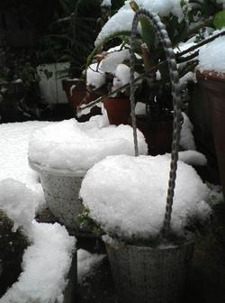 Snow20080203_1_r