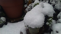 Snow_1_20130114m
