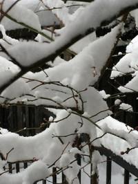 Snow_20140208m