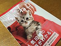Chiineko_20150626m