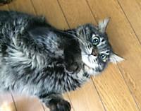 Cat_11_20150901m