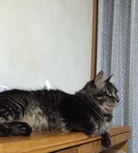 Cat_1_20150901m