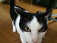 Cat_21_20150901m