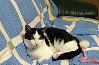 Cat_2_20150901m