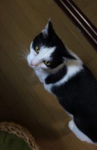 Cat_2_20151018m