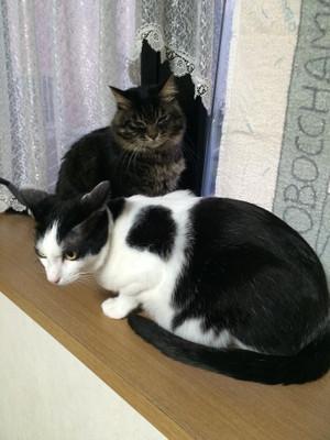 Cat_1_20151231m