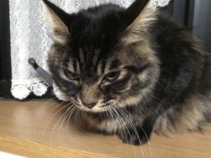 Cat_3_20151231m