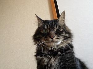 Cat_1_20160416m