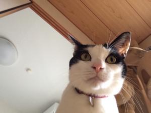 Cat_2_20160416m