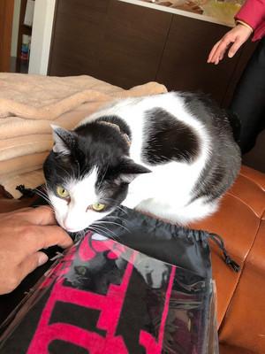 Cat_1_20181216